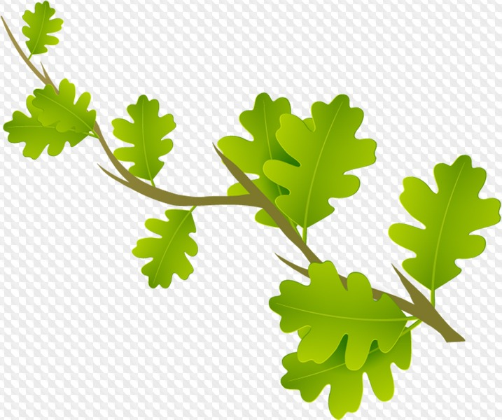 PSD, 54 PNG, Leaves, branches with leaves clipart with.