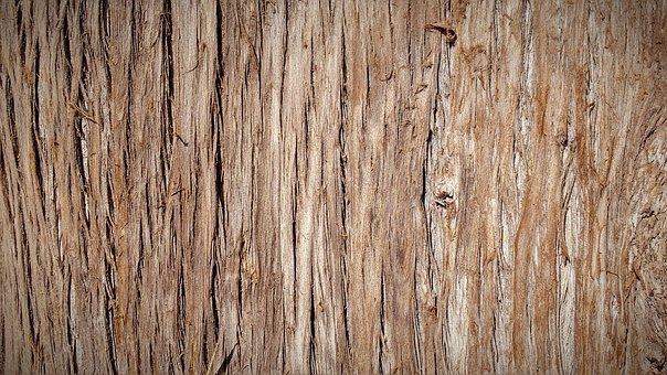 Tree, Bark.