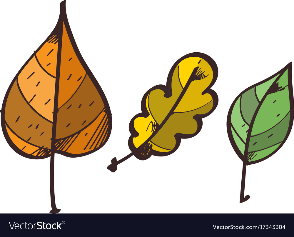 Three leaves from the trees clipart color on a.
