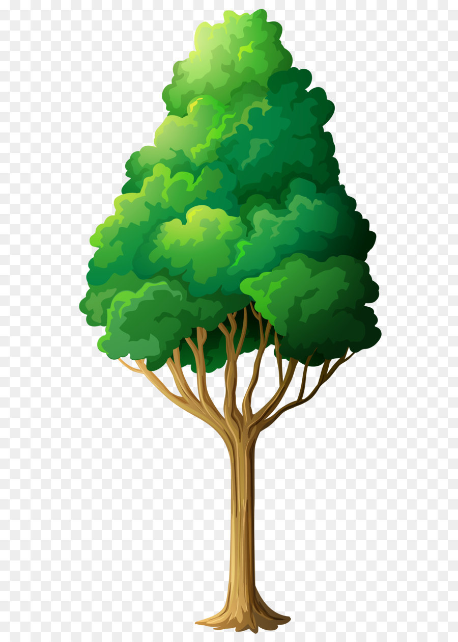 Oak Tree Drawing png download.