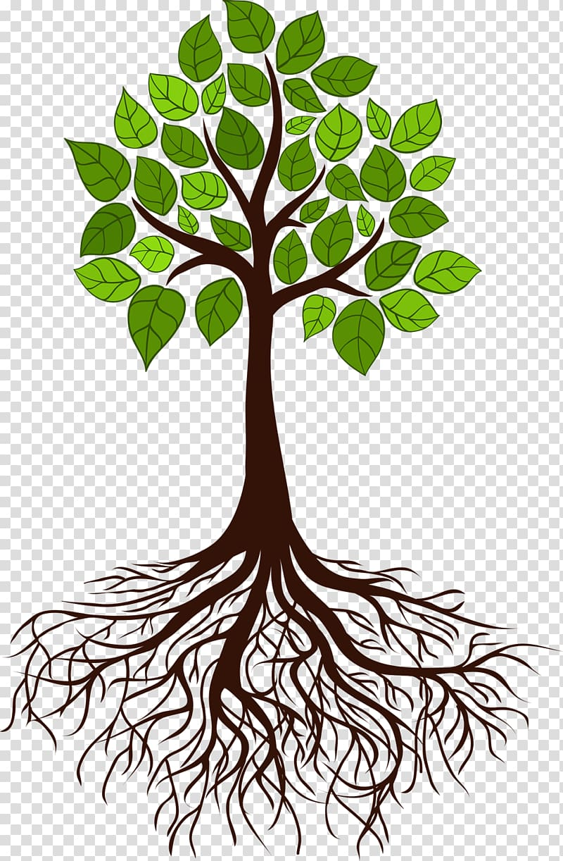 Tree illustration, Tree Root Branch, tree roots transparent.