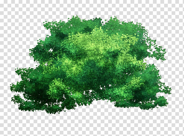 Green leafed tree , Tree Branch Bark Plant, tree top view.
