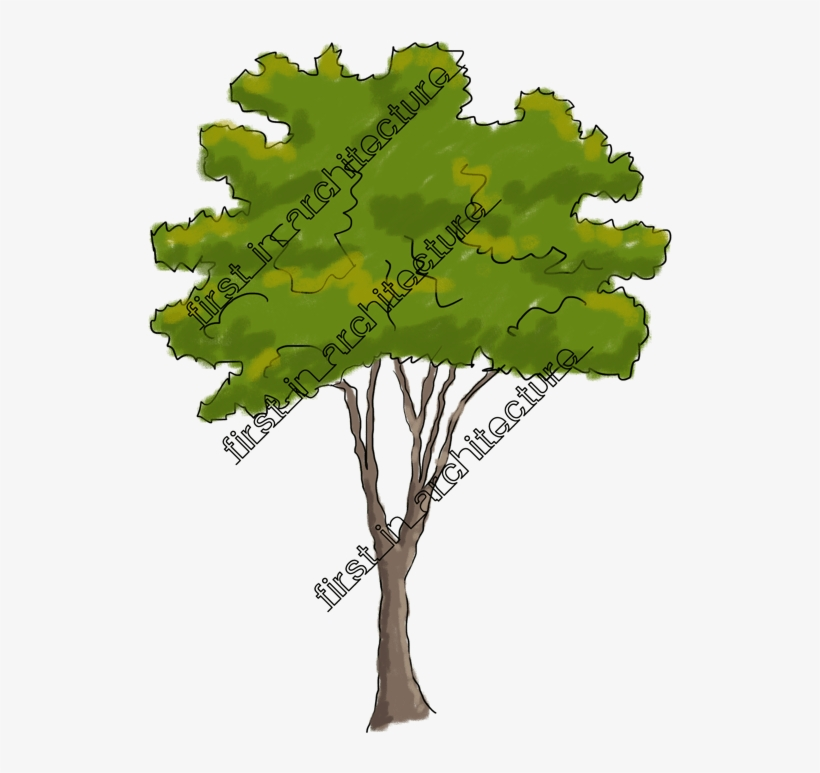 Sketchy Trees Png Clip Art Free Download.