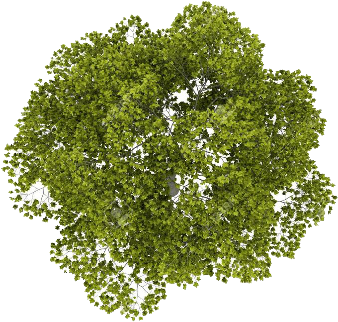 Tree Top Png Image.