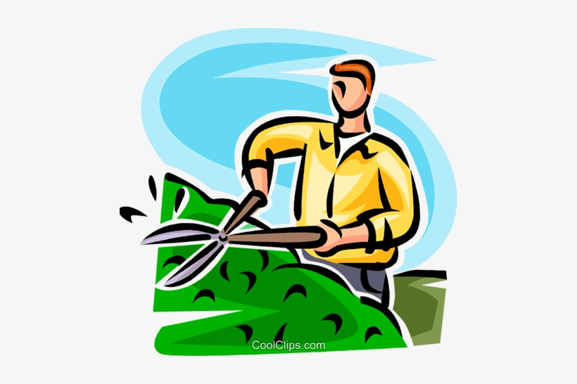 Man Trimming A Hedge Royalty Free Vector Clip Art.
