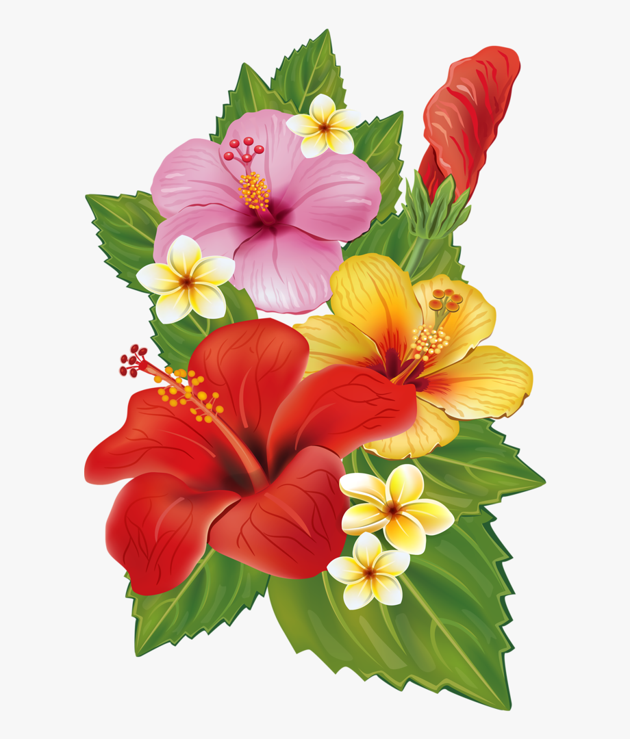 Png Hawaiian Flowers.