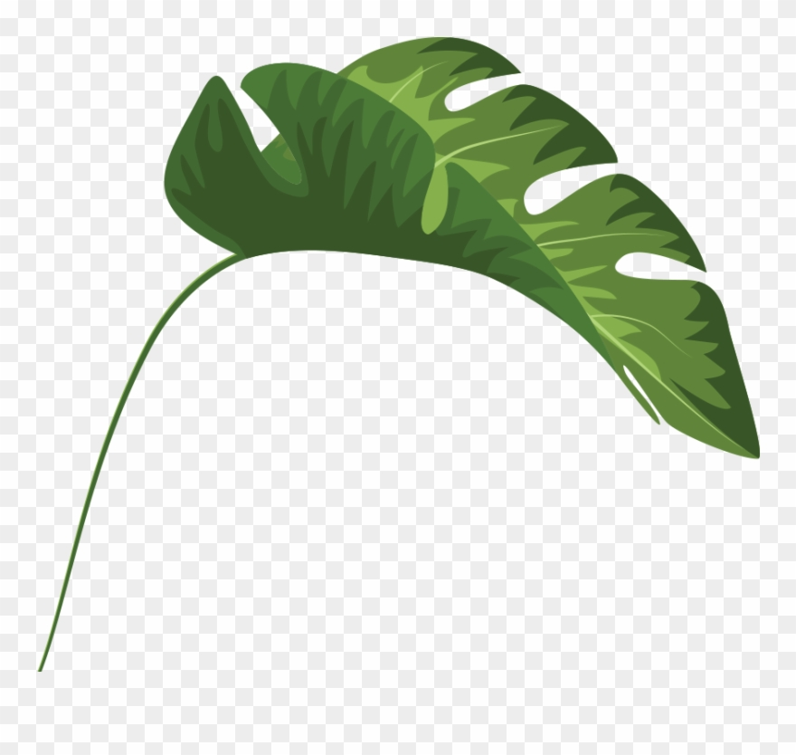 Tropical Leaves Palm Banana Monstera Mugs Clipart (#1944193.