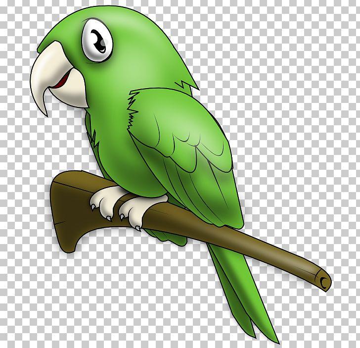 True Parrot Lovebird PNG, Clipart, Beak, Bird, Clip Art.