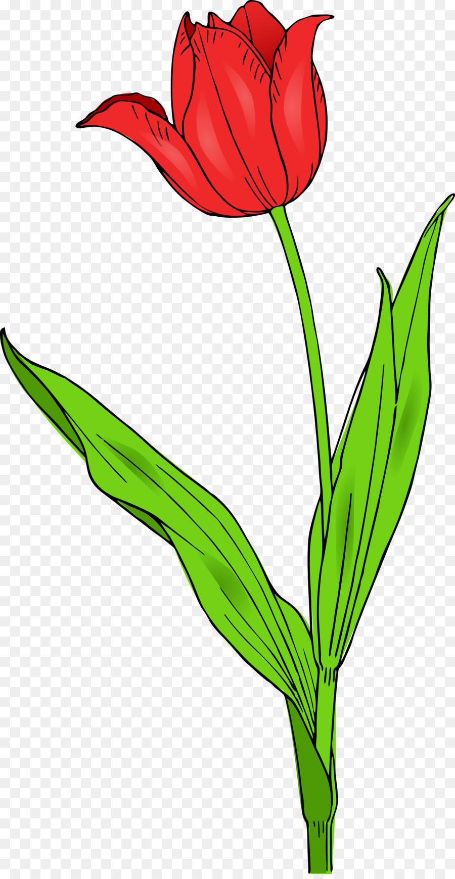 Flower, Plant, Tulip, transparent png image & clipart free download.
