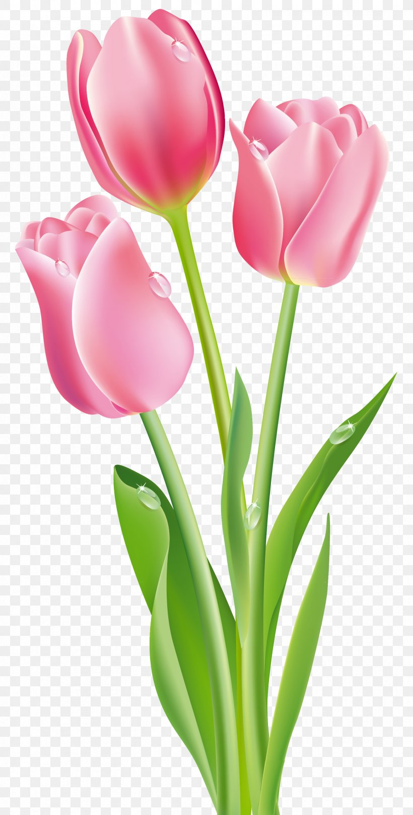 Tulip Flower Pink Clip Art, PNG, 1712x3373px, Tulip, Close.