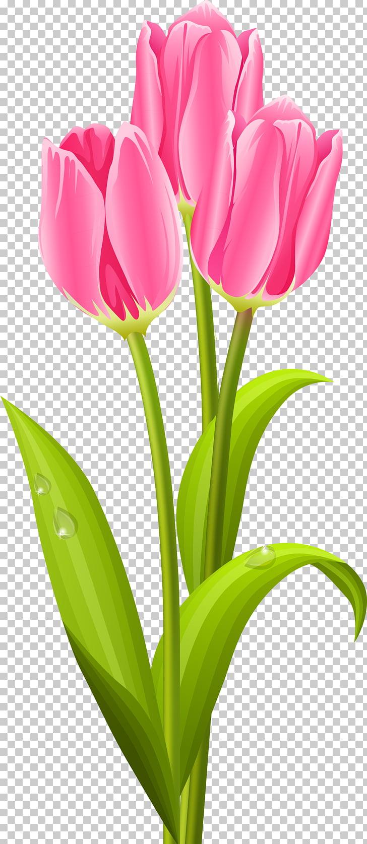 Tulip Flower bouquet , tulip PNG clipart.