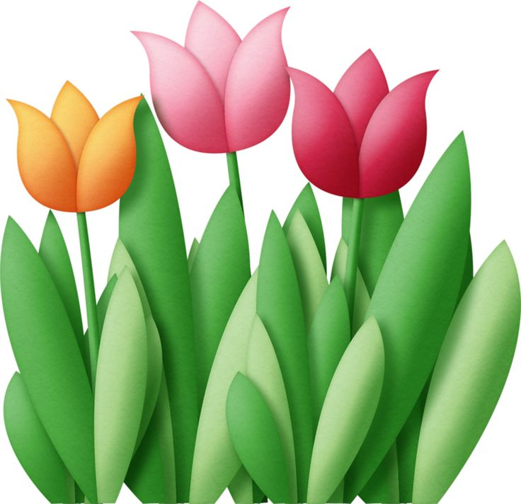 Tulip Clipart at GetDrawings.com.