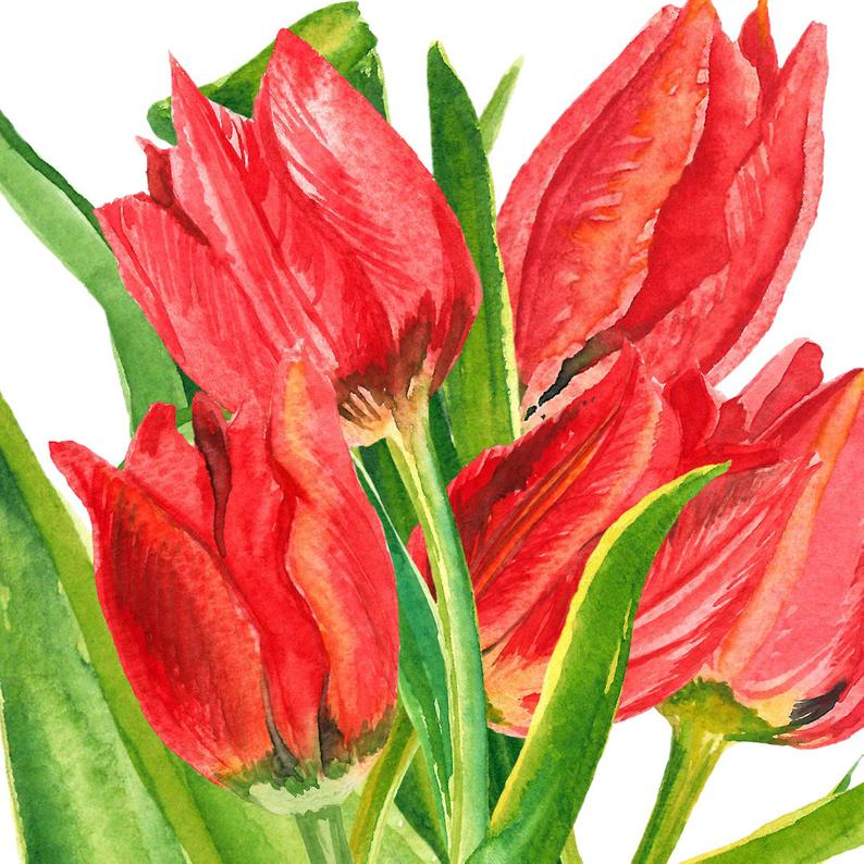 Spring flower clipart, Tulip clipart, narcissus clipart, watercolor flowers  clipart, Handpainted clipart, floral clipart.