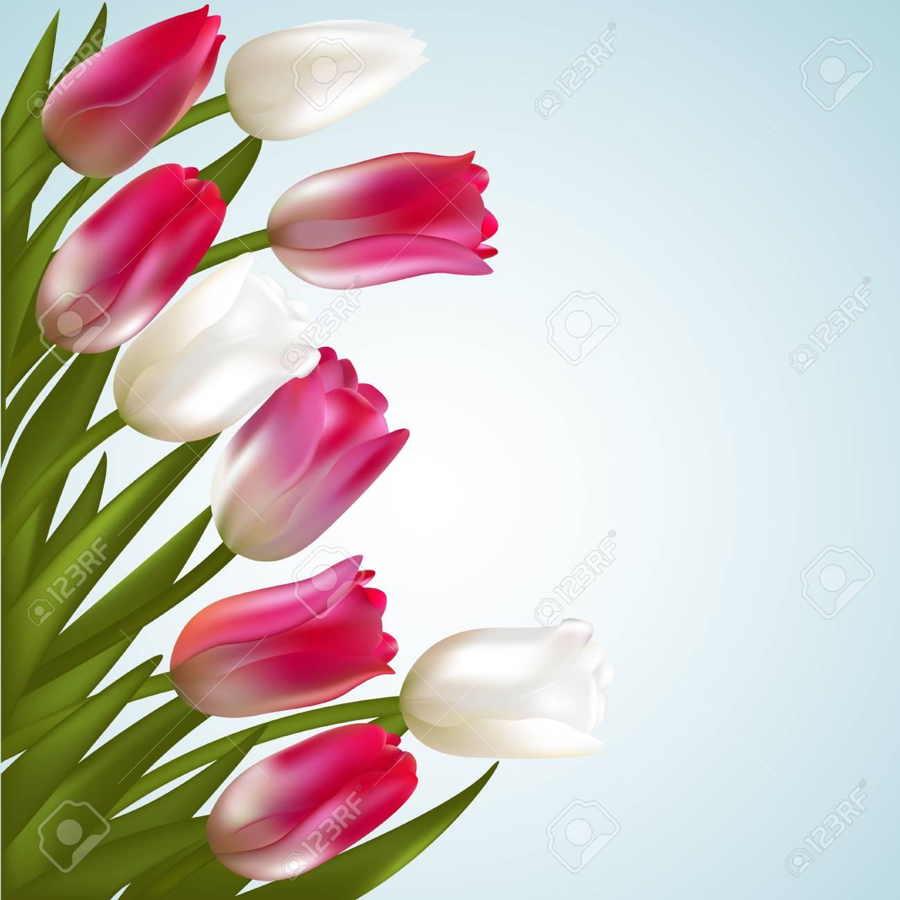 Tulips. Spring flowers. Frame. Border. Floral background. Vector..