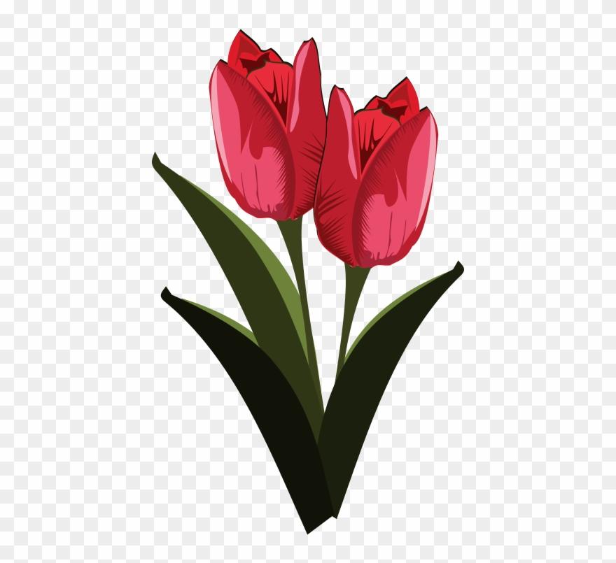 Tulip Free To Use Clip Art.