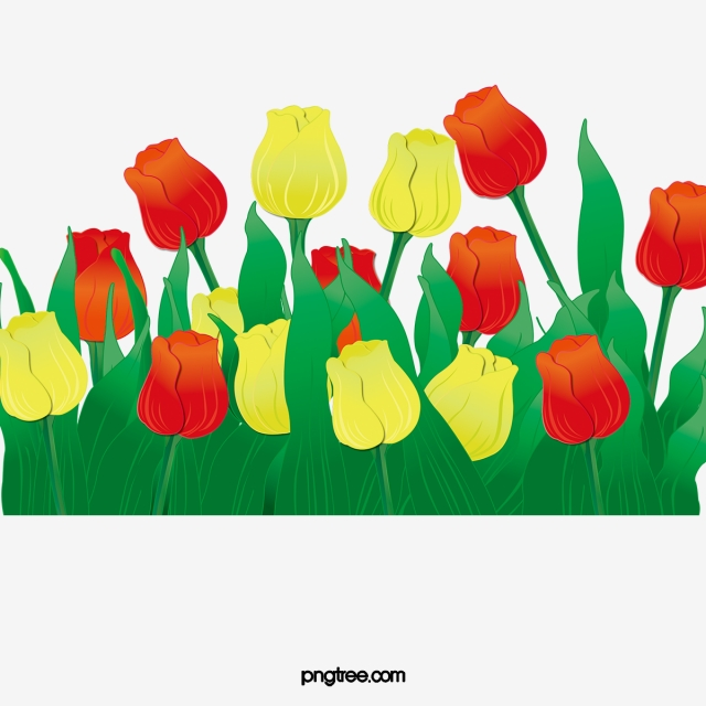 Tulip Flowers, Tulip Clipart, Tulip, Yellow Flowers PNG Transparent.