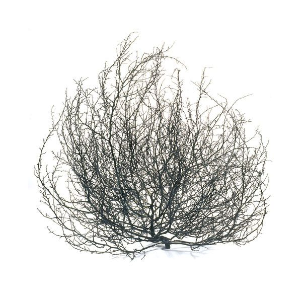 Free Tumbleweed Cliparts, Download Free Clip Art, Free Clip.