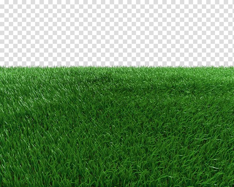 Grass Field transparent background PNG clipart.