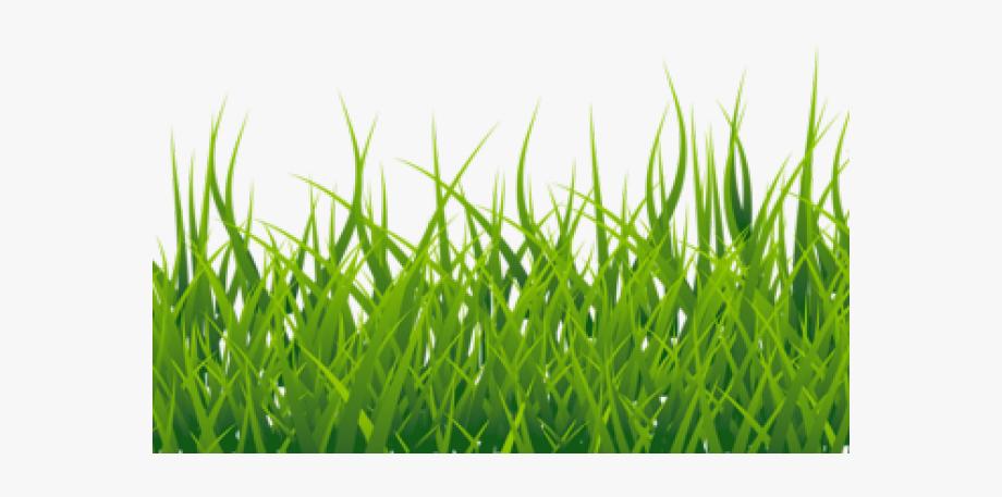 Lawn Clipart High Grass.