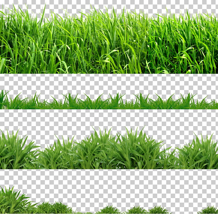 Lawn Computer Icons , grass PNG clipart.