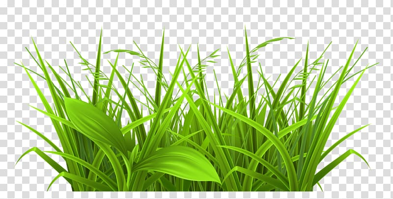 Free content , Free Grass transparent background PNG clipart.