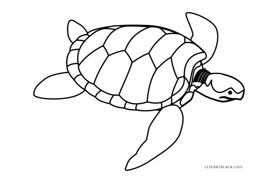 Black White Collection And Sea Turtle Line Drawing.
