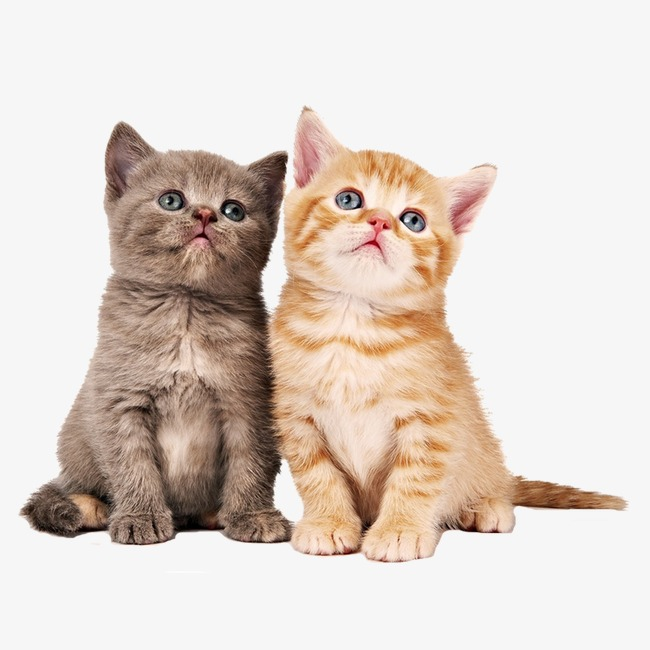 Download Free png Two Cats, Animal, Cat, Lovely PNG Image.