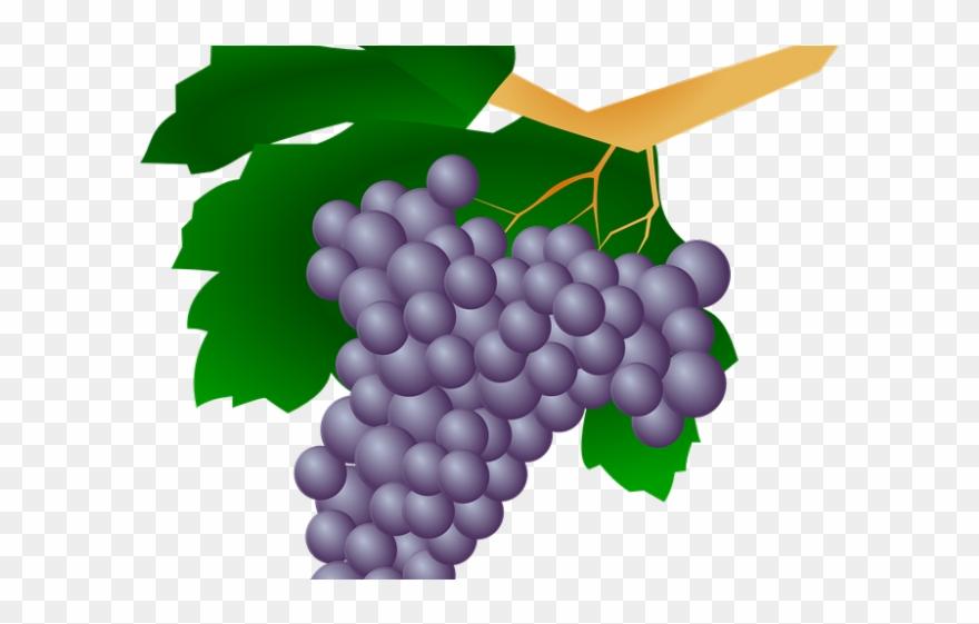 Grapes Clipart Uva.