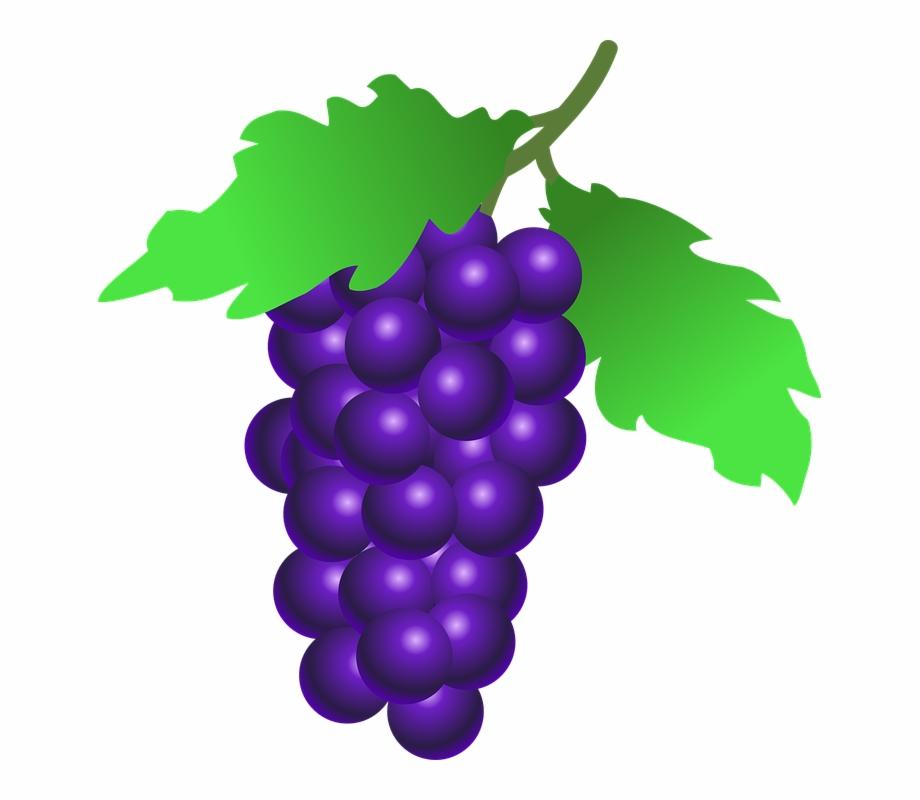 Uvas Desenho Png Bunch Of Grapes Clipart.
