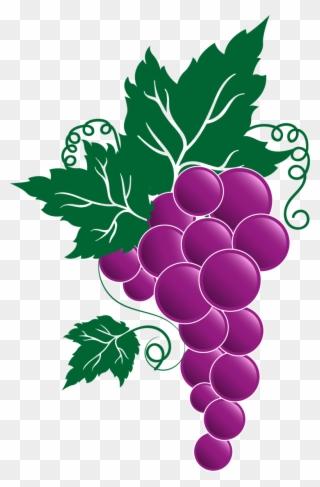 Transparent Grape Vines.