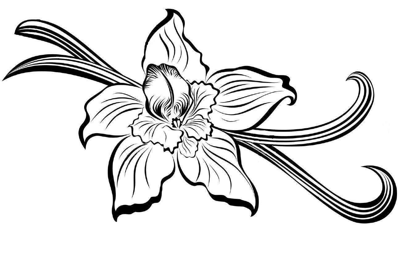 vanilla bean orchid clip art.