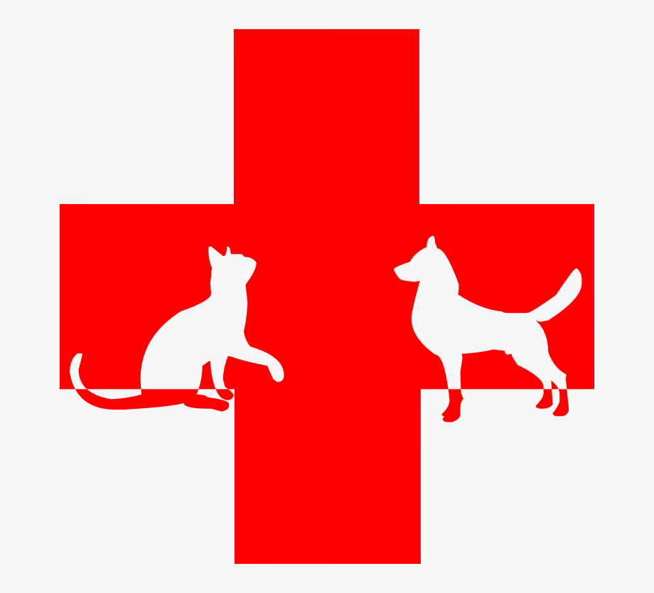 Veterinary First Aid.