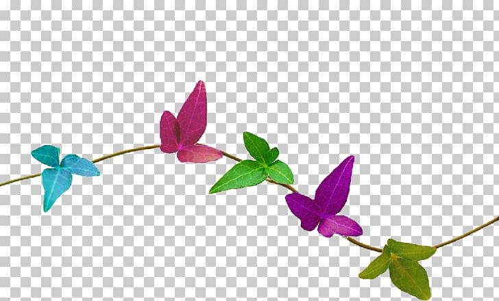 Vine Nature Desktop , home decorations PNG clipart.