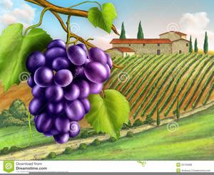 Vineyard Clipart.