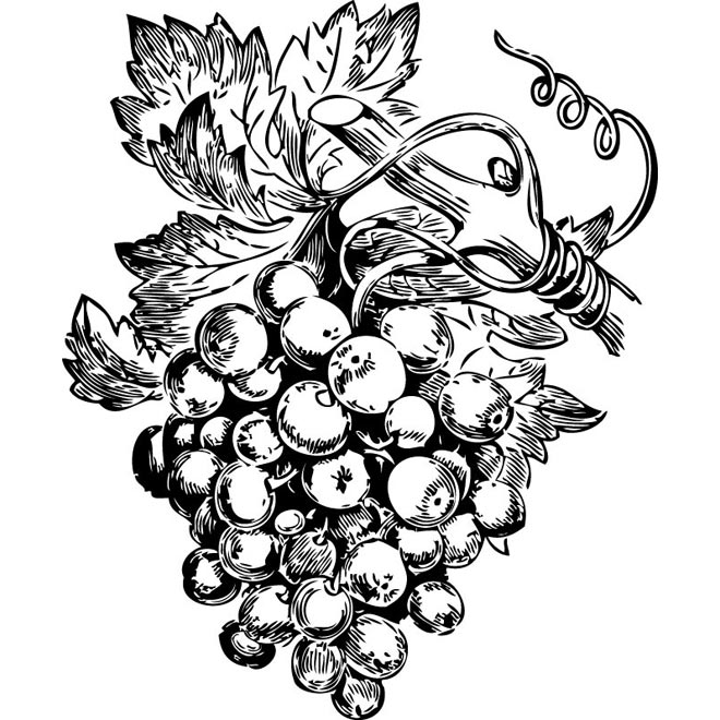 Vineyard grapes clipart.