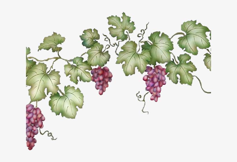 Vineyard Clipart Grape Vine.