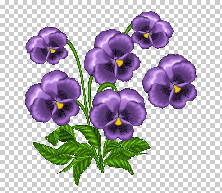 Light African violets , captivity PNG clipart.