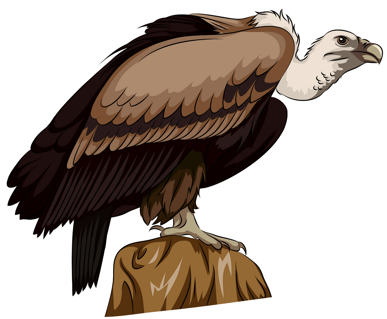 Long Billed Indian Vulture clipart. Free download..