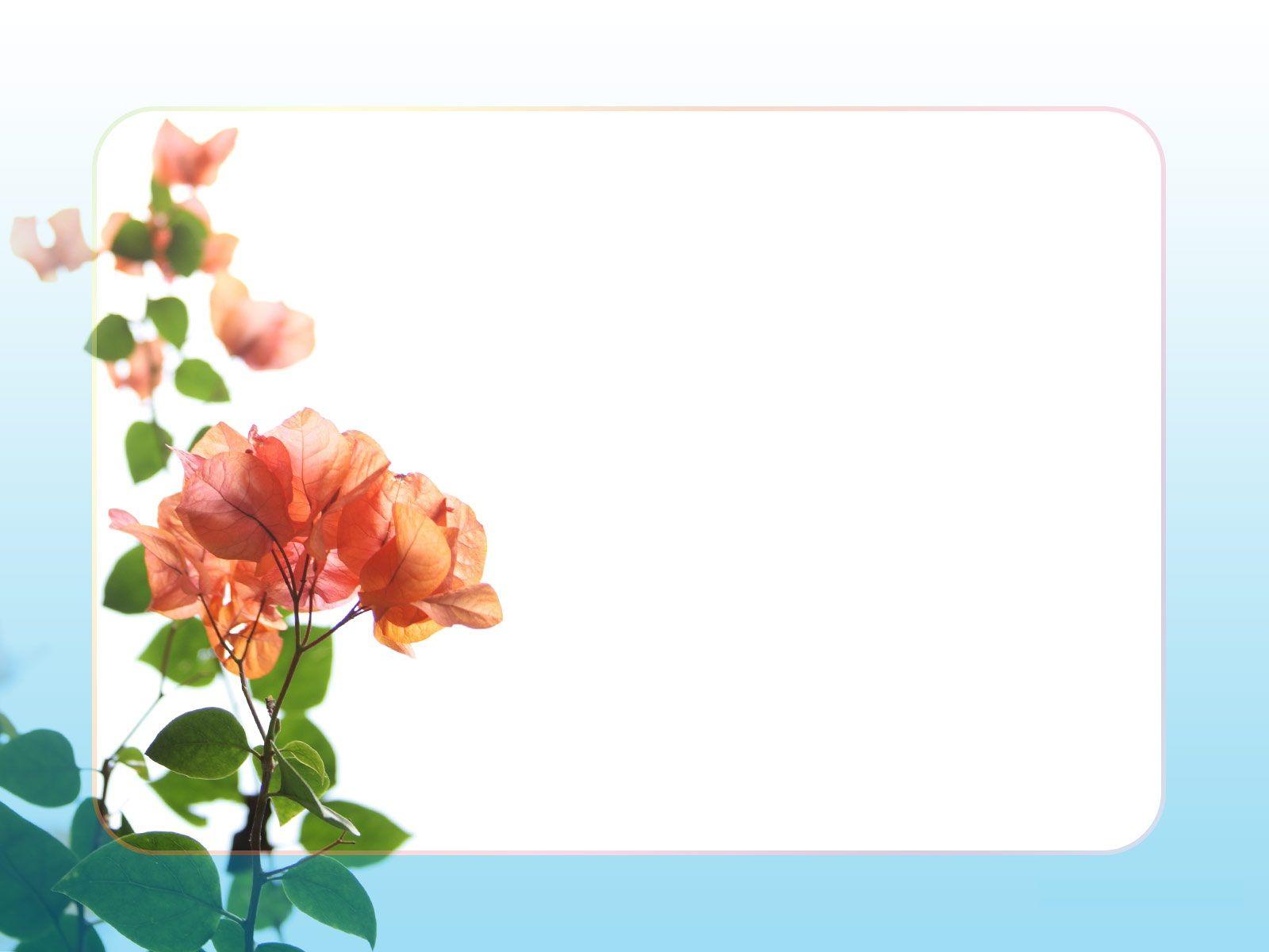 Flower Border Clip Art Hd Background Wallpaper 27 HD.