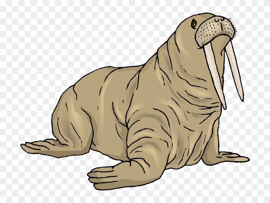 Walrus Clip Art.