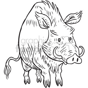 warthog clipart. Royalty.