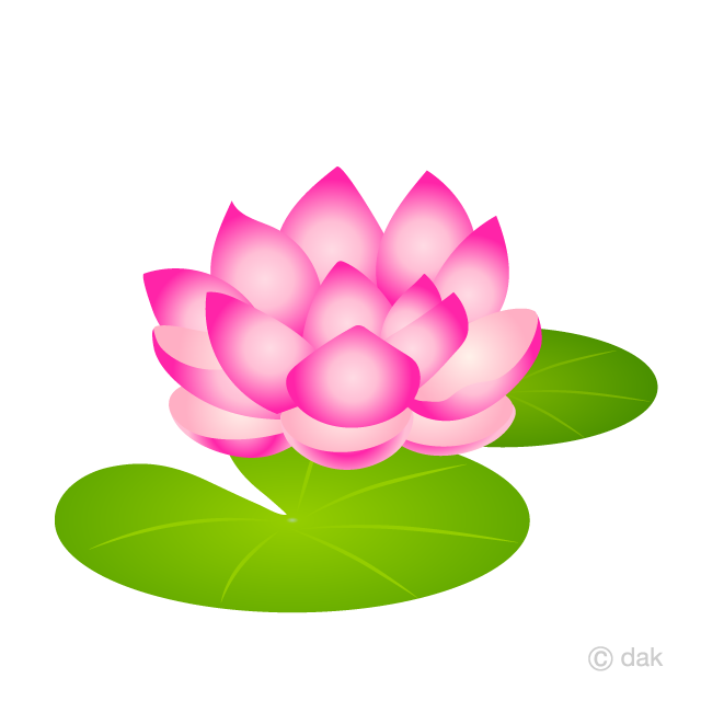 Free Water Lily Flower Clipart Image Illustoon.