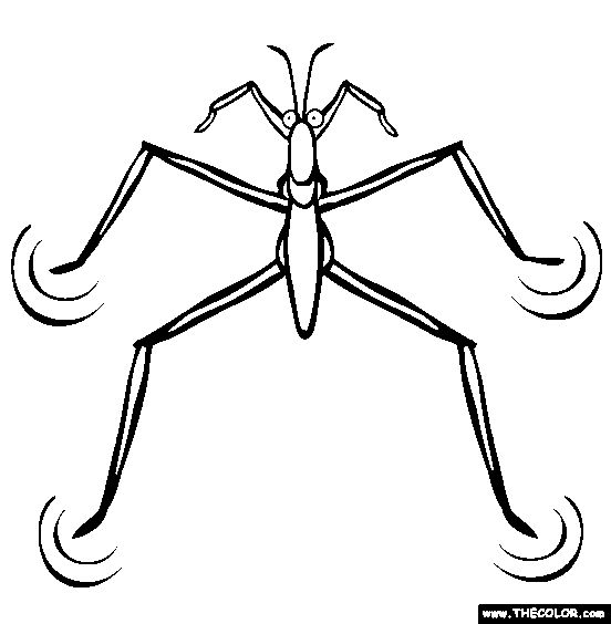 Bugs clipart water beetle, Bugs water beetle Transparent.