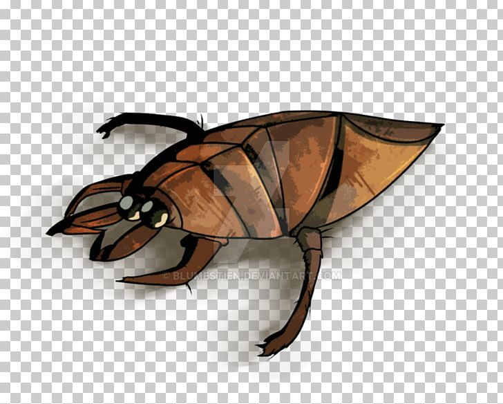 Insect Giant Water Bugs Drawing Graphics PNG, Clipart.