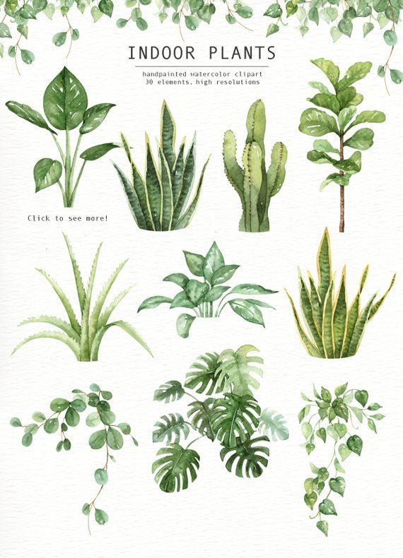 Indoor Plants Watercolor clipart, Watercolour Leaves.