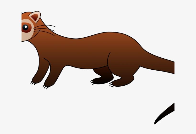 Ferret Clipart Weasel.