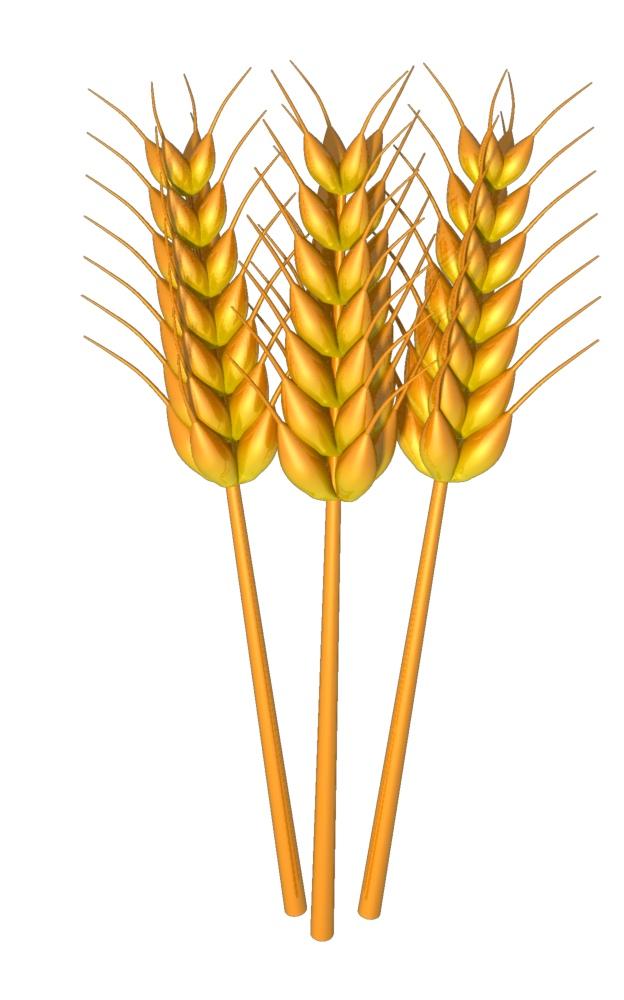 Free Wheat Cliparts, Download Free Clip Art, Free Clip Art.