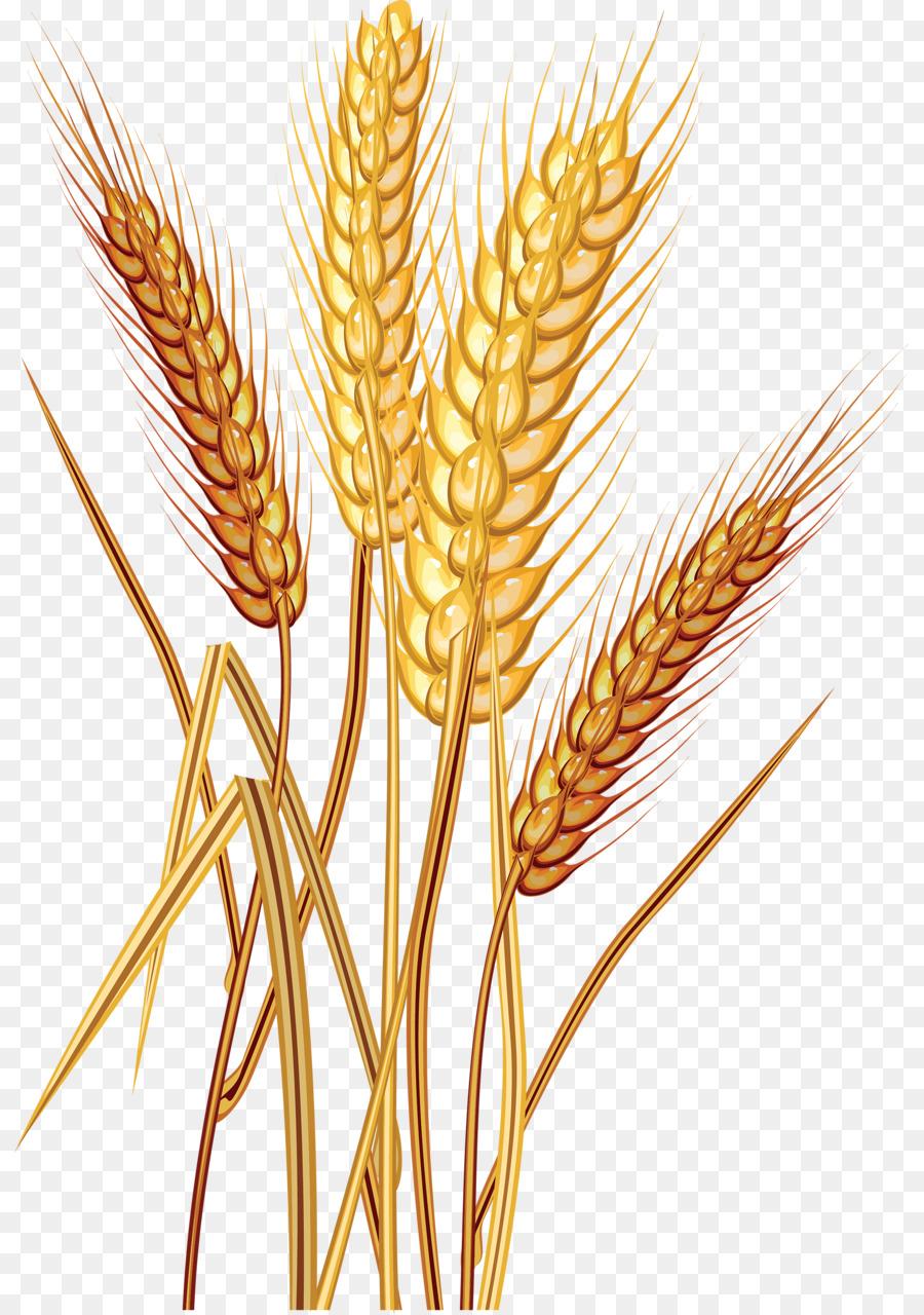 Wheat Cartoon clipart.