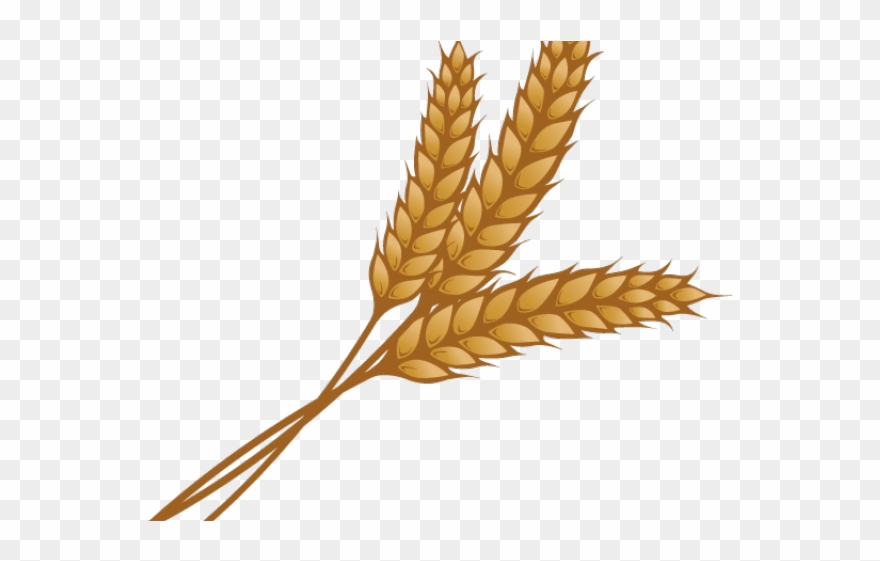 Wheat Clipart Single Piece.