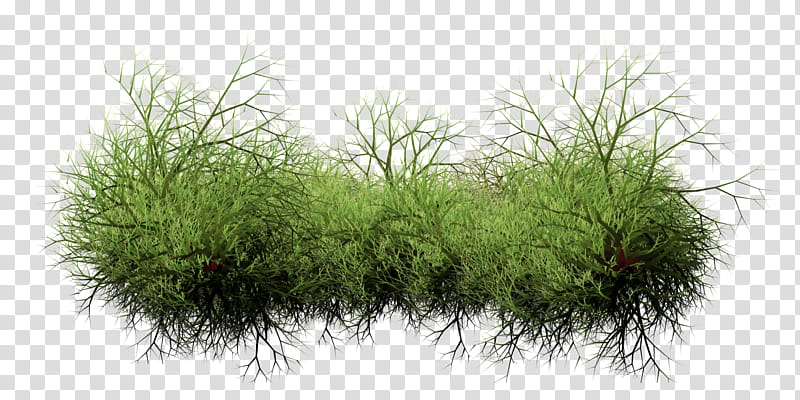 Weeds transparent background PNG clipart.